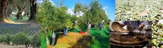 Öl - Olivenöl